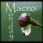 Macro Monday at Lisa
