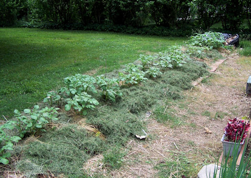 Image result for potato lasagna bed