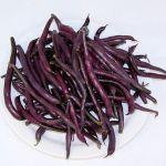 Purple Queen bush bean