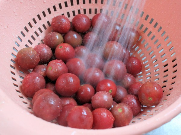 rinsing the tomatoes before slicing