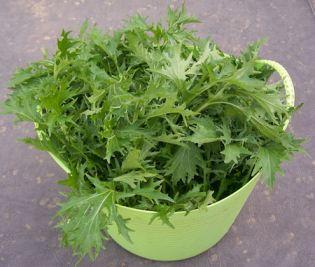 Tubtrug full of mizuna greens