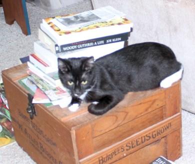 Ace on seed box