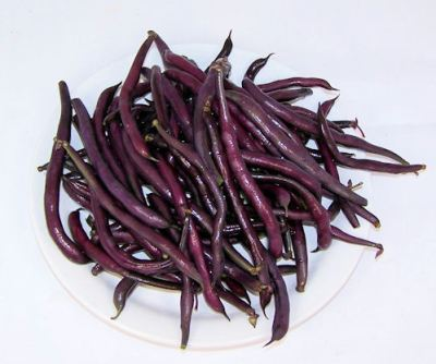 Purple Queen bush beans