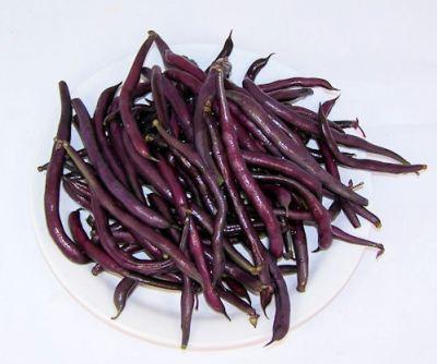 Purple Queen bush beans