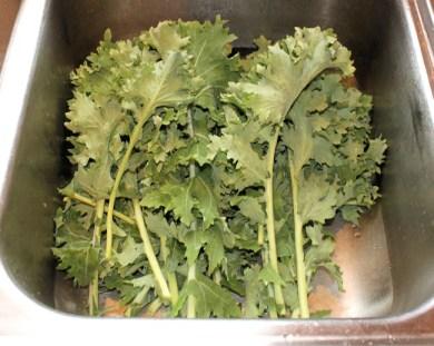 harvest of Beedy
