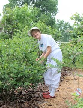Lynda in the blueberry patch