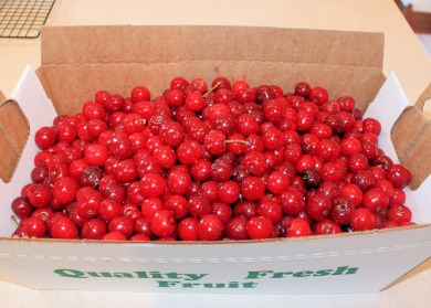 cherries from Farview Orchards