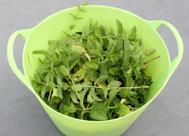 spearmint for drying