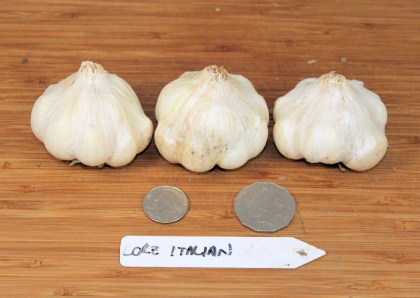 Lorz Italian artichoke garlic