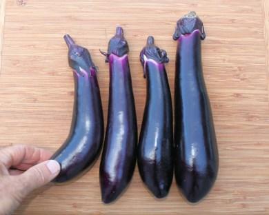 harvested Millionaire eggplant