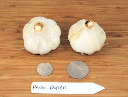 Pennsylvania Dutch porcelain garlic