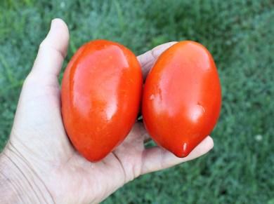 Big Mama paste tomatoes