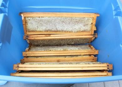 honey frames in big storage container