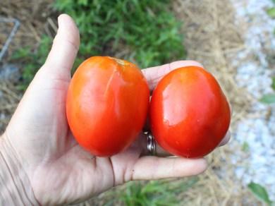 Rio Grande paste tomatoes