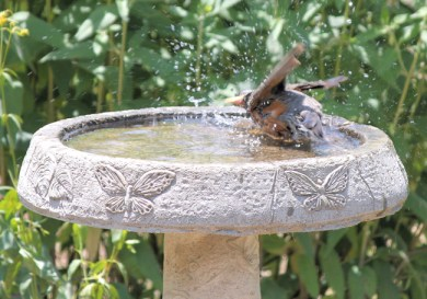 Robin taking a bath