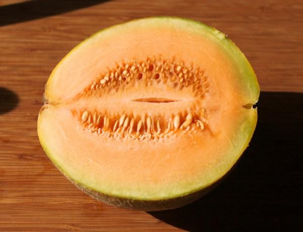 Ambrosia cantaloupe