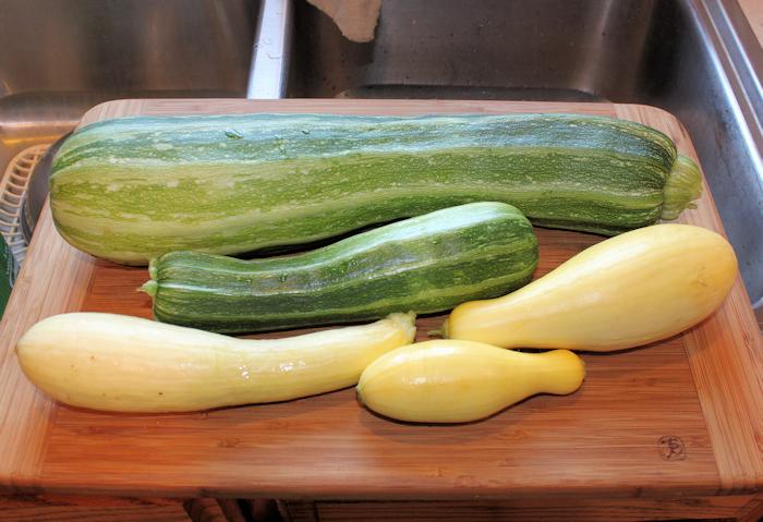 September harvest of Striata d' Italia, Enterprise and Gentry squash