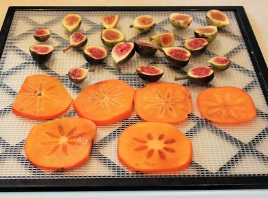 figs and persimmon on dehydrator sheet