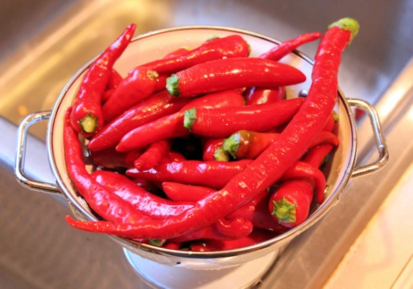 hot peppers for 2013 fermented hot sauce