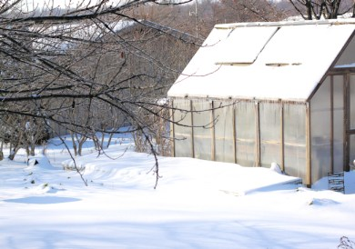 cold frames covered in 2013 snow