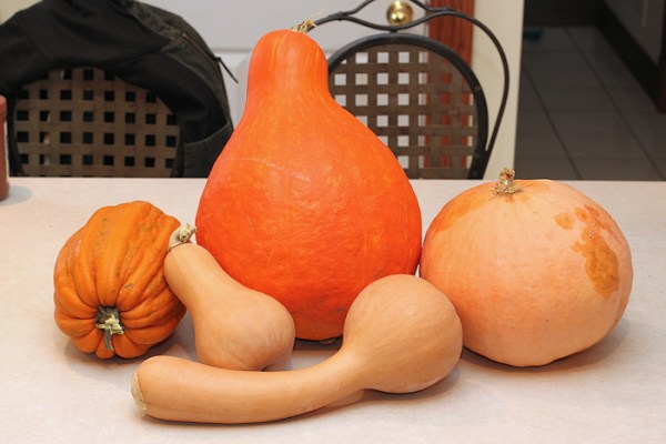 winter squashes for smackdown
