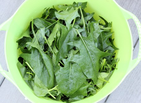 tubtrug of spinach ready for washing and blanching