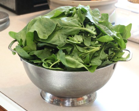 May spinach harvest
