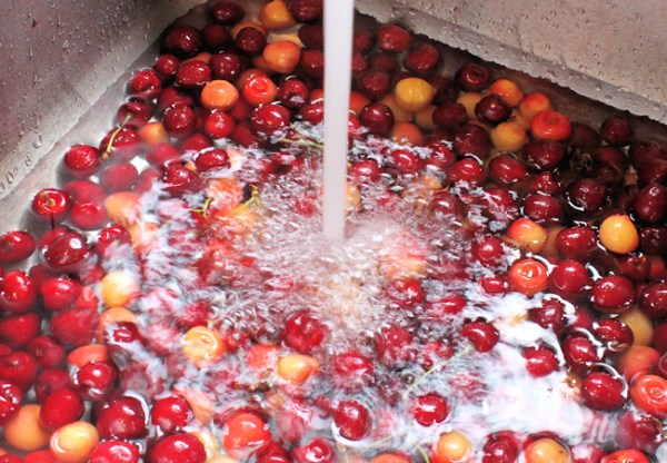 rinsing the cherries in cold water