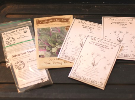 seeds for fall vegetables