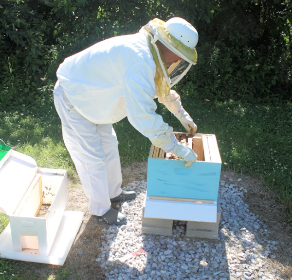 me installing bee nuc in our hive