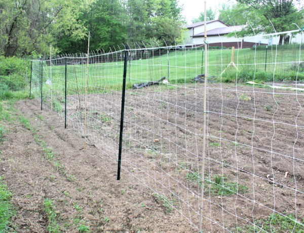 htrellis for pole beans