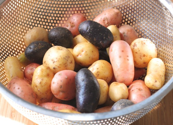 assortment of fingerling potatoes