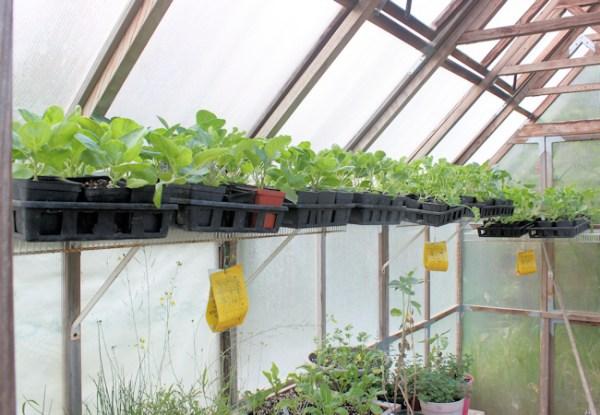 fall veggies fill the greenhouse shelves