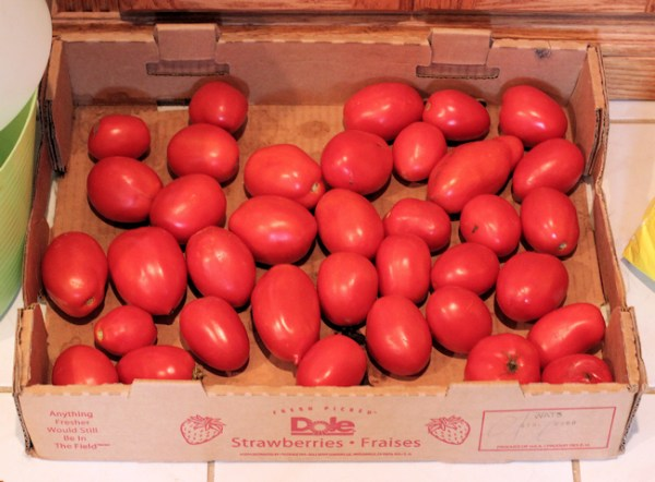 paste tomatoes waiting to be processed