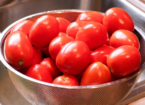 tomatoes for making tomato paste