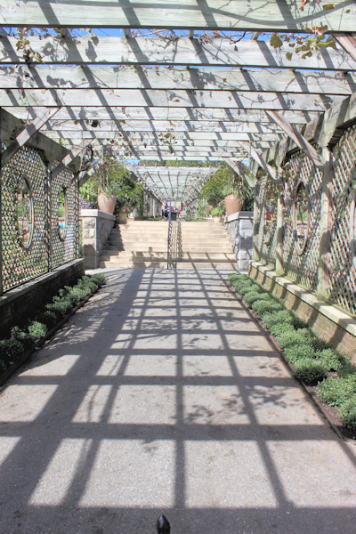 walkway with grapevine covered trellis