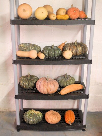 storage for winter squash
