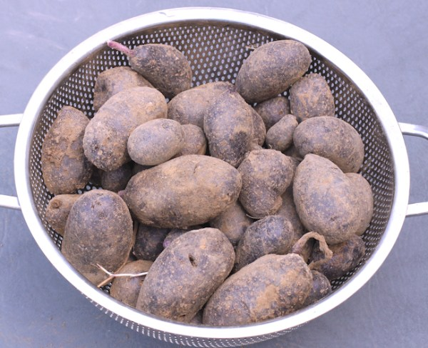 Magic Molly potatoes