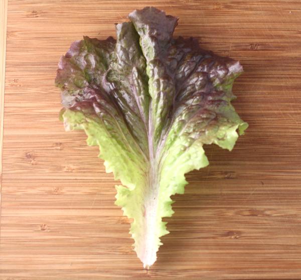 mature leaf of Red Sails lettuce