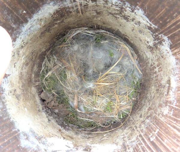 nest  in bottom of PVC nest box