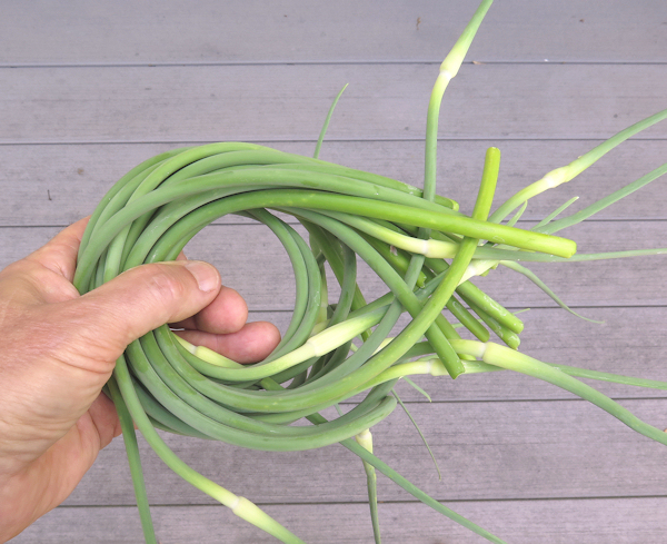 handful of garlic scapes