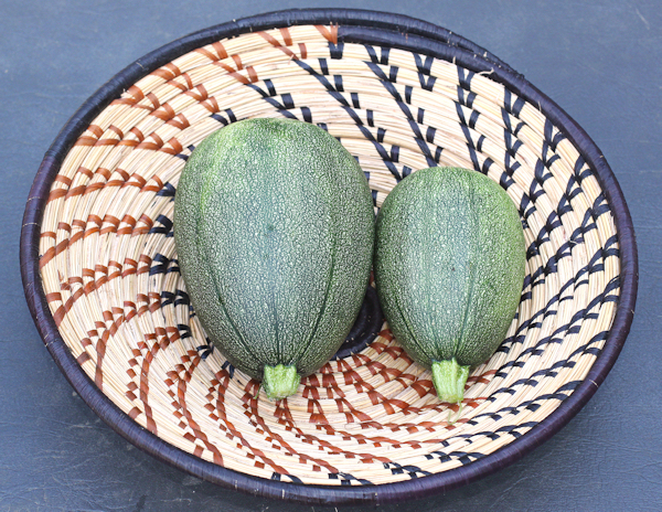 pair of Tatume squash