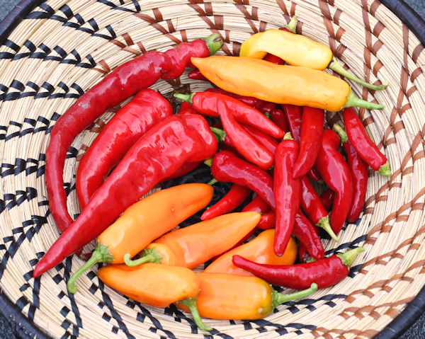 hot peppers for hot sauce
