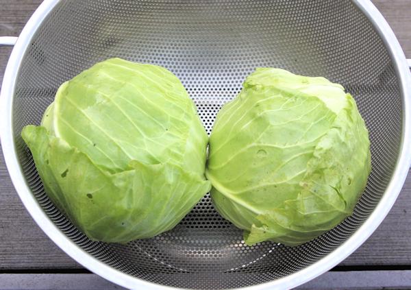 Farao and Parel cabbage