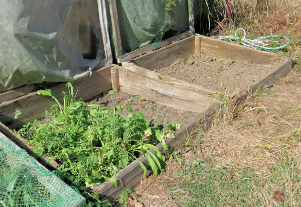cold frame beds