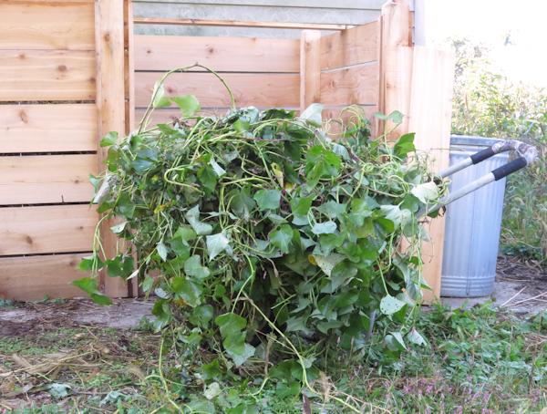 composting sweet potato vines