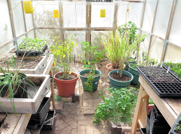 greenhouse with container plants