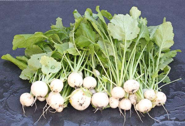 Oasis turnips