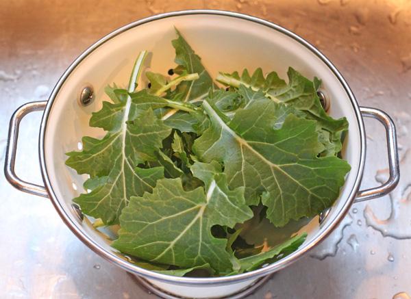 mizspoona harvest foir frittata