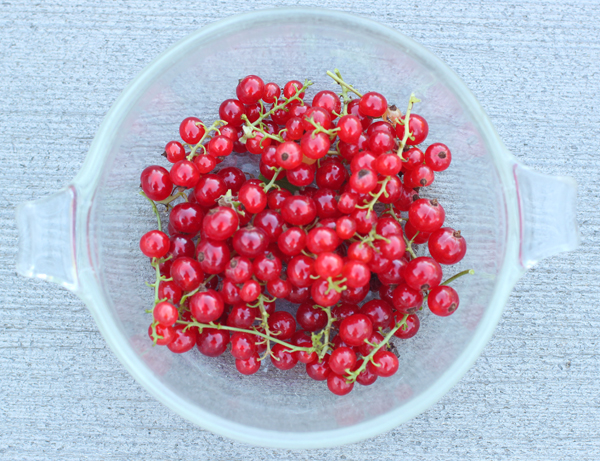 Cherry Red currants